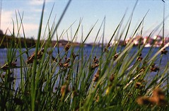 (Christian Gttner) Tags: stocken sverige szwecja schweden sweden landschaft landscapes lato landscape analog analogue rossmannhr400 35mm europa natur nature natura wasser water vatten umwelt outdoor film heaven himmel horizont