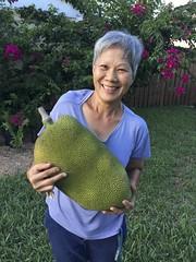 Jackfruit (Artocarpus heterophyllus) (Adam J Skowronski) Tags: jackfruit artocarpusheterophyllus homegrown