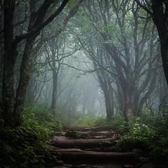20160804-GLN_4368.jpg (czwilson18) Tags: naturemasterclass