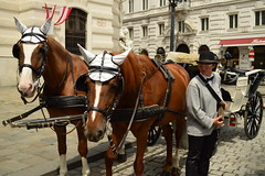 Charlie and Vito (fletcherd5) Tags: bowlerhat hats earcovers brownhorse brown carriage horsedrawncarriage austria citytour vienna horses horse ears