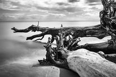 slow (hansekiki ) Tags: jasmund rgen nationalpark strand beach landschaften longexposure langzeitbelichtung bigstopper canon 5dmarkiii ostsee balticsea