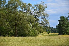 green summer (JoannaRB2009) Tags: green summer trees meadow path warta river rzeka valley flowers landscape nature view sky blue sunny dzkie lodzkie polska poland strosko