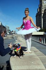 DSC06445 (liverpix) Tags: cleo dog performing anthonywalsh photowalk 500px liverpool pierhead liverbuilding ballerina ballet