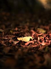 Herbst (Elmar Egner) Tags: bokeh zeiss carl makroplanar planart250 licht autumn