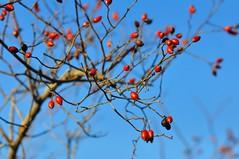 Red dots (Giovanni Ulivi) Tags: 6annifa cretesenesi