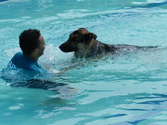 Dog and Owner (dcnerd) Tags: dog dogs pool dogsswimming swimmingdogs dogsinwater dogsplay dogpoolparty puppies dogsinpool swimming wheatonglenmontpool wheatonglenmontdogpoolparty labs labradors labsswimming huskies huskyswimming blacklabs chocolatelabs dogswater dogsatplay water