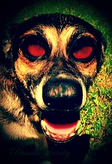 Puppy Eyes (rhonda_lansky) Tags: puppyeyes eyes creepy surreal unusual strange funny halloween leo lansky rhondalansky dogart bigeyes redeyes dog dogs puppy outdoors scifi fantasy nightmares creepydog fisheyefilter dreams