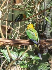 """Le Parc des Oiseaux d'Iguaçu: des perruches <a style=""""margin-left:10px; font-size:0.8em;"""" href=""""http://www.flickr.com/photos/127723101@N04/29531313762/"""" target=""""_blank"""">@flickr</a>"""