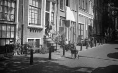 Enter (Arne Kuilman) Tags: akarette xenon 50mm lens ilford xp2 nederland netherlands handheld c41 centrum dog enter house schneiderkreuznach xenon50mmf2 hond