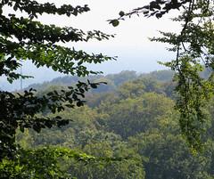 IMG_5242 (jaglazier) Tags: 2016 91416 bielefeld copyright2016jamesaglazier deciduoustrees germany hills september teutoburg teutoburgforest teutoburgerwald trees landscapes mountains parks nordrheinwestfalen