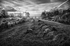 Rows of hay BW (Harry Sterken) Tags: bw griendtsveen hdr peel sunrise zonsopkomst