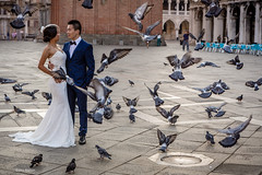 Couple getting married enjoy a moment with pigeons in  Piazza San Marco (St. Peter's Square) - Venice Venezia (Phil Marion (55 million views - thanks)) Tags: public italian phil marion 5photosaday beauty beautiful travel vacation candid beach woman girl boy wedding people explore  schlampe      desnudo  nackt nu teen     nudo   kha thn   malibog    hijab nijab burqa telanjang  canon  tranny  explored nude naked sexy  saloupe  chubby young nubile slim plump sex nipples ass hot xxx boobs dick dink