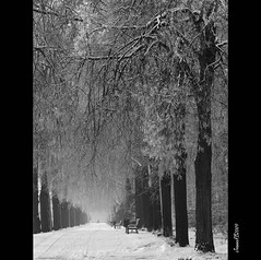 in the city (JoannaRB2009) Tags: park city trees winter bw snow nature blackwhite alley path walk poland polska avenue lodz d rememberthatmomentlevel4 rememberthatmomentlevel1 rememberthatmomentlevel2 rememberthatmomentlevel3 rememberthatmomentlevel5 rememberthatmomentlevel6