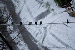 . (Alessandro Ferrantelli) Tags: italia palermo pianadeglialbanesi pianadeglialbanesi2012alessandroferrantelli