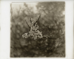 - --2 (.:Josh:.) Tags: sepia darkroom turkey print 75mm silvergelatin autaut ilfordmultigraderc geocity exif:focal_length=75mm beseler23cii geostate geocountrys omnicronel75mm fotospeedsepiatonerst20 camera:make=beseler camera:model=beseler23cii exif:make=beseler exif:model=beseler23cii exif:lens=omnicronel75mm