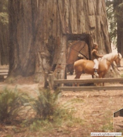 New pony in the Redwoods