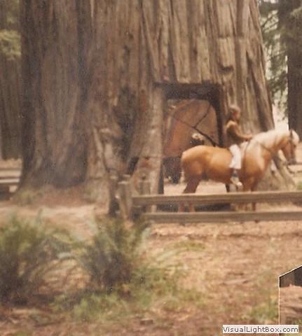 New pony in the Redwoods