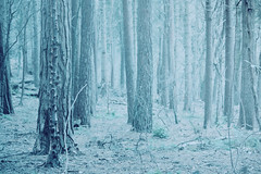 Winter woods (Gondolin Girl) Tags: park wood blue trees winter tree nature forest grey woods glasgow actions lieveheersbeestje linnpark