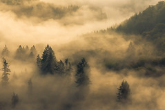 Fog at the Saarschleife (karjul) Tags: trees mist tree fog forest deutschland nikon europa nebel pflanze fluss wald bume baum saarland ort dunst saarschleife d90 mettlach mygearandme mygearandmepremium blinkagain