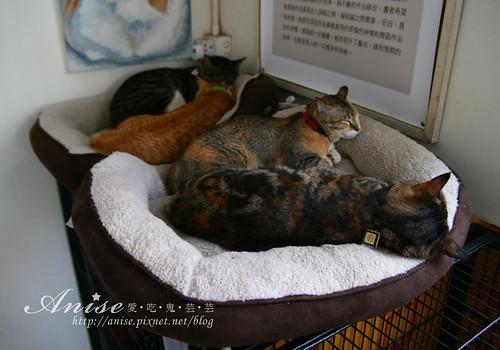 4貓空間003拷貝.jpg