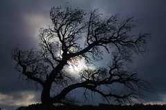 Silueta / Silhouette (Jos Rambaud) Tags: cloud tree sol silhouette arbol silueta nube tarifa alcornocales flickraward me2youphotographylevel2 me2youphotographylevel3 me2youphotographylevel1 me2youphotographylevel4