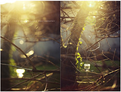 Ill cut through your dark cloud to see the sun myself, pale and decayed, an ugly growth* (| Les Hirondelles |) Tags: winter italy sun tree nature glass grass backlight canon garden haze shiny europe poetry italia poem branch dof shine bright bokeh quote branches details ivy sunny line flare jar trunk hanging hazing leafless tangle candleholder hang brightness dylanthomas giardino selectivefocus 100mm28 leshirondellesphotography illcutthroughyourdarkcloudtoseethesunmyselfpaleanddecayedanuglygrowth