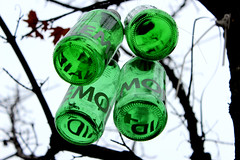Bottles in the tree (roomman) Tags: house colour tree green art nature skyscraper germany bottle europe downtown european colours hessen bottles artistic euro frankfurt central bad bank installation highrise hanging economy hang banks zone 2012 ecb banken ezb europeancentralbank eurozone