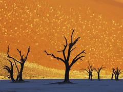 42-21168696 (iustinteo2008) Tags: africa travel trees dead outdoors nationalpark sand desert dune nobody remote backlit desolate namibia southernafrica deadvlei drylakebed namibdesert publicland namibnaukluftpark