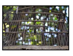 To Cage an Age (MariposaCruz (Coming Back As Time Allows!)) Tags: wood blue light sky blur macro bird birdcage closeup sticks bars bokeh circles cage structure spots age organic effect artful macroshot colorspots lightspots bokehbars
