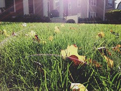 leaf on on a lawn (AnthonyTulliani) Tags: sun sunlight fall grass leaves yard garden leaf play lawn front flair phoneography iphone5 iphoneography vscocam uploaded:by=flickrmobile flickriosapp:filter=nofilter