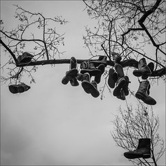 8/365 - spring in cologne? (polomar) Tags: park tree project shoe spring flickr sony cologne kln tradition schuhe baum projekt zeit volksgarten shoefiti rx1 metime shoeflinging 8365 polomar ichzeit