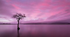 Loch Lomond Sunrise (Billy Currie) Tags: red sky lake tree beautiful dawn bay scotland alone scenic minimal lone wee ng colourful loch lomond trossachs lochs milarrochy