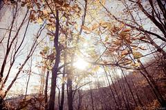 Nos quedamos ciegos (chukiast) Tags: trees naturaleza sun tree hoja sol nature look canon vintage arbol leaf woods december blind tokina bosque pro diciembre 116 2012 atx ciego 550d