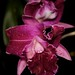 Blc. Plum Island 'Newberry' – Craig Johnson