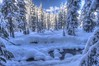 Brrrrr (Andrew E. Larsen) Tags: winter white snow cold snowshoeing wintersky snoqualmiepass papalars a3b andrewlarsen andrewlarsenphotography