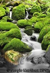 Sedas en Muniellos (La Monjita 44) Tags: naturaleza musgo ro flora agua nikon asturias paisaje bosque seda arroyo vegetacin corriente cascada manantial medioambiente caudal narcea d90 cauce muniellos ecosistema fluyendo fuido