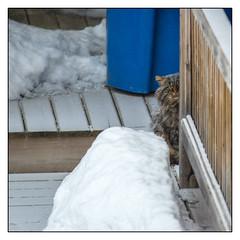 Le chat de mon voisin est un espion (maoby) Tags: city baby face animal cat fun big funny chat god 300mm sos espion arbre minou pourpre dmon