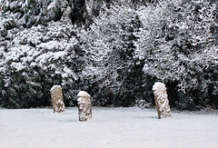 Snow in the Graveyard