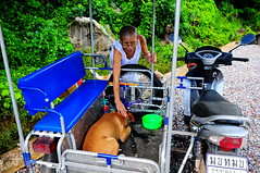 ,, Rocky, Going2 Vet ,, (Jon in Thailand) Tags: rocky nun sidecar jungle dj dog dogs k9 nikon nikkor d300 175528 red green orange 555 blue vet injection medications donations help spayed bigbaby vaccine littledoglaughedstories