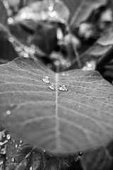 366 - Image 204 - Brief shower... (Gary Neville) Tags: 365 365images 366 366images photoaday 2016 sonycybershotrx100 sony sonycybershotrx100iii rx100 mk3 garyneville