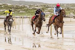 catch me if you can #30/52 week challenge (Sigita JP) Tags: horserace petterns beach horses westofireland connemara 52weekchallenge
