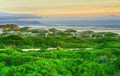 Transformation (david.gill12) Tags: skyline mist sunset strollers dunes outdoor beach