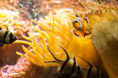 Acuario Agosto 2016 (82) (Fernando Soguero) Tags: acuario zaragoza acuariodezaragoza aragn turismo aquarium nikon d5000 fsoguero fernandosoguero