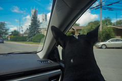 """Some of the many """"Are we there yet?"""" moments (lezumbalaberenjena) Tags: trip road car inside toyota dog perro chien boston terrier bully quebec"""