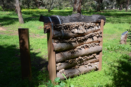 DSC_5713 bee hotel, Waite Arboretum, Uni of Adelaide, South Australia