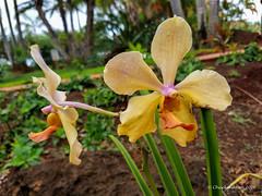 Grove Farm (1 of 16) (Chuck 55) Tags: grove farm kauai hawaii