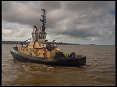 IMG_3431 Svitzer Bidston (mikemcfallphotography) Tags: sviter sviterbidston rivermersey merseyside mersey tug tugboat liverpool liverpooldocks liverpoolwaterfront mikemcfall michaelmcfall