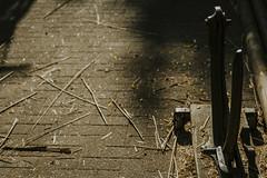 Till_Junker_20160914-_ILL4678 (scharfgestellt) Tags: reetdach reetdachdecker dachdecker handwerk stade reetdachdeckerjunker reetdachhaus junker stadehagen landkreis natur umwelt nature handmade