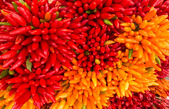 Italian Chillies (mark196611) Tags: chillies italy spice colourfull