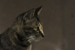IMG_1761_1 (pavel.milkin) Tags: thailand phuket phukettown travel cat wakeup look canon canon550d 550d helios helioslens helios442 442 green colour bokeh bokehlicious